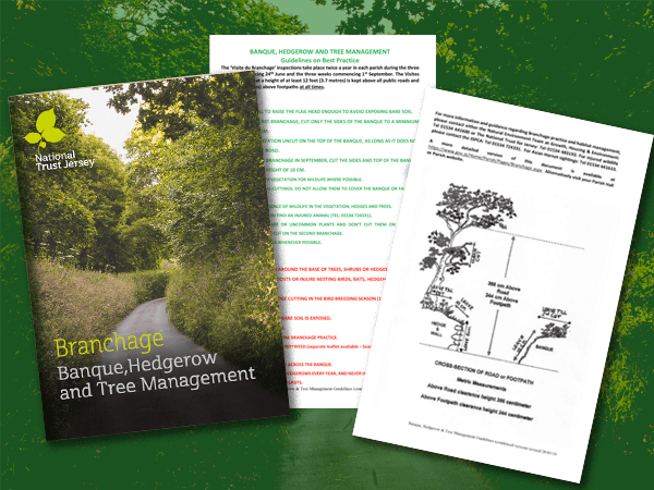Branchage – Banque, Hedgerow & Tree Management